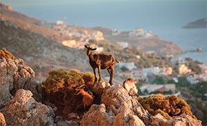4-Kos-nature-and-sights