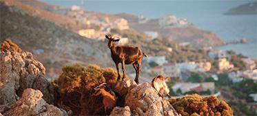 2-Kos-nature-and-sights